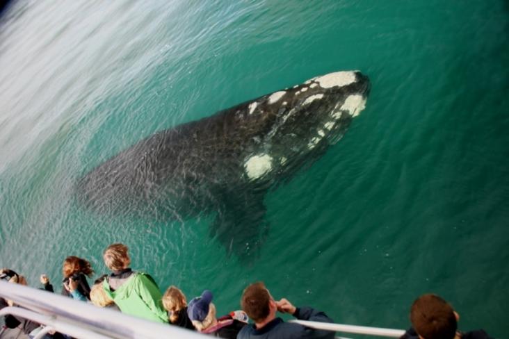 Whale Season 2012