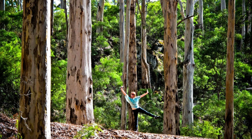 Spot the monkey in Boranup Forest