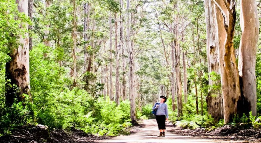 Walk the Karri Forrest