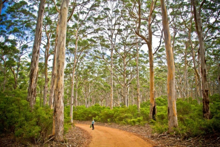boranup-forest-with-margaret-river-discovery-co