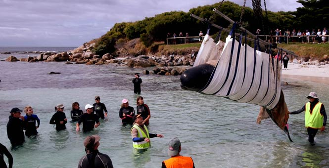 Hopes raised as Whales head for open water