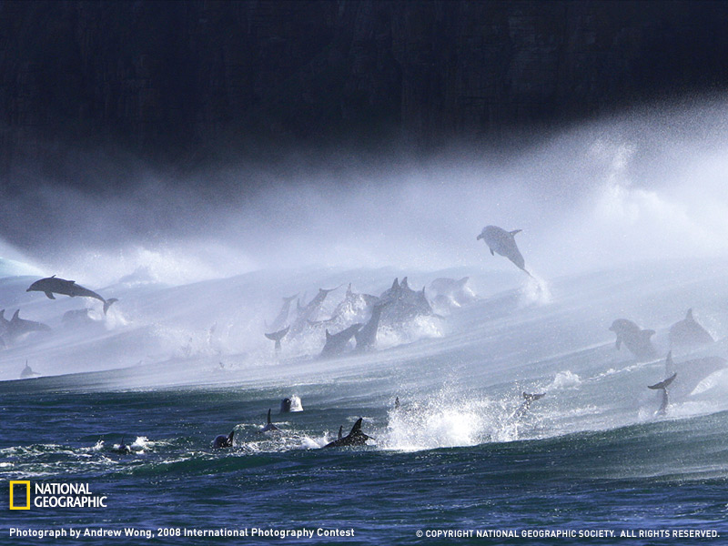 Bottlenose Dolphins. Photograph by Andrew Wong