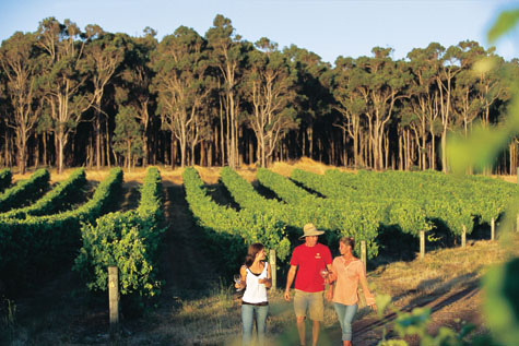 Spring in the Margaret River vineyards
