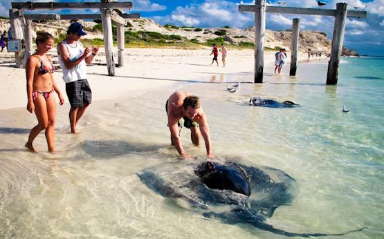 Sting Rays to be protected at Hamelin Bay