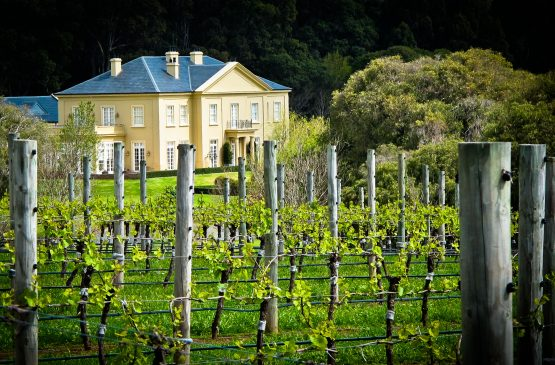 Out in the Vineyard Spring 2012