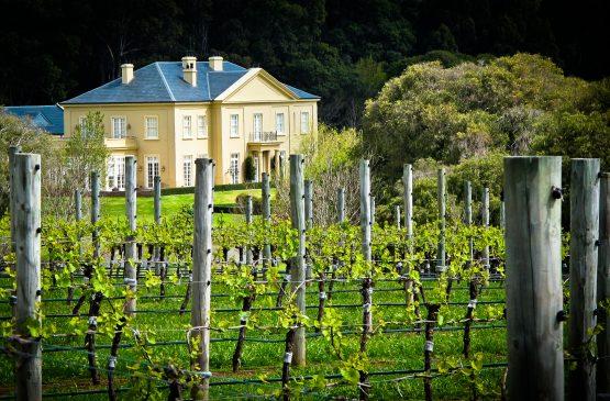 Vineyards at Fraser Gallop Estate