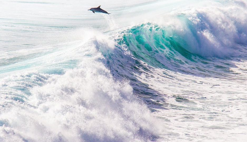 The locals surfing at Margaret River