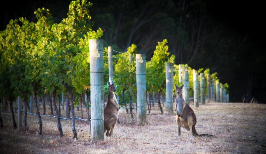 Tour the vineyards of Margaret River