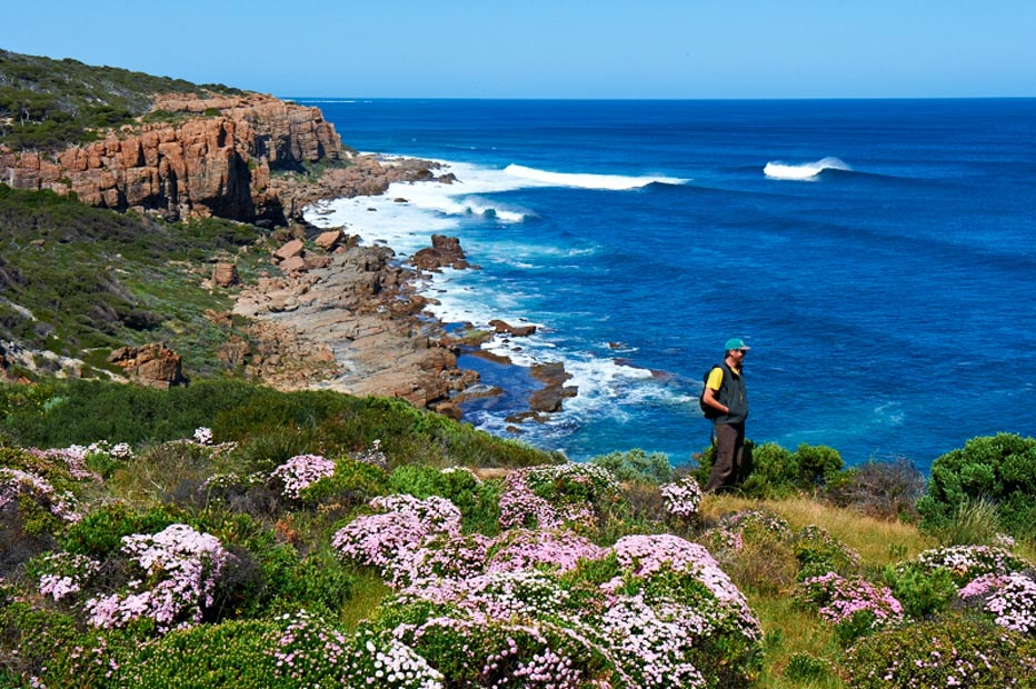 Spring wildflowers on the Cape to Cape Track with Margaret River Discovery Co