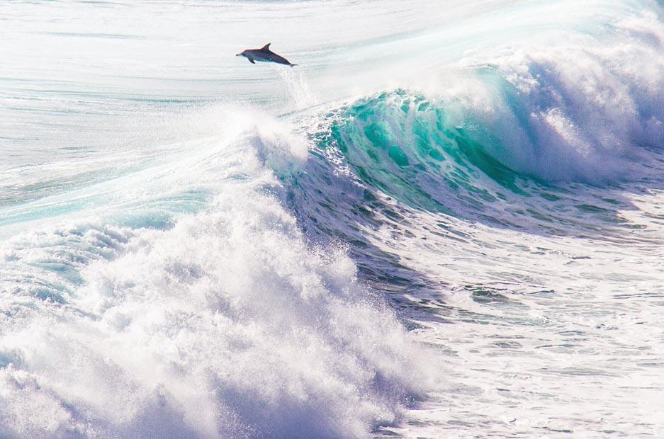 Dolphins - Margaret River