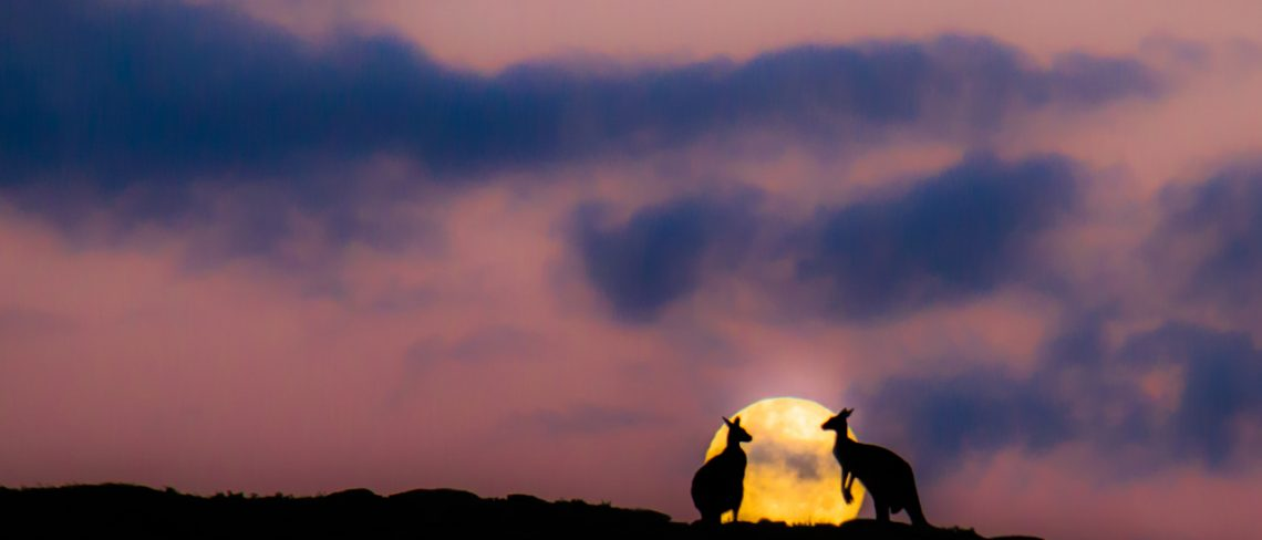 Kangaroos in Moonlight with Margaret River Discovery Tours