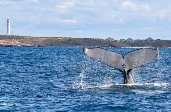 Margaret River whale watching tours